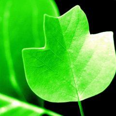 Environmentally Friendly Plastics