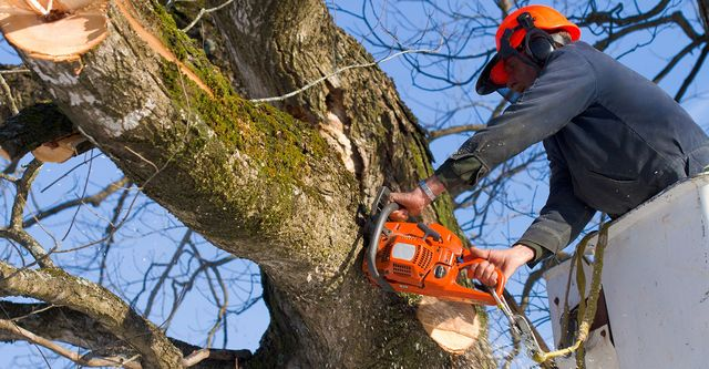 Understanding The Need And Importance Of Tree Surgeon Insurance